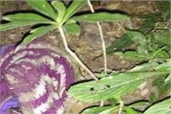 shruti s missing skeleton found on the hills of chongdhar