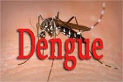 dengue sting 1266 patients found positive