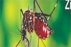 zika virus in punjab