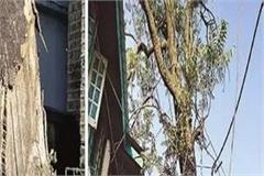 tree threatened for historic buildings and people