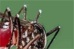 department failed to control dengue mosquitoes