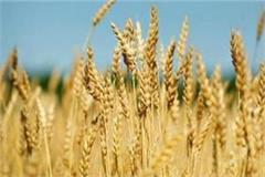 farmers dismiss wheat support price