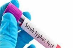 scrub typhus in bilaspur