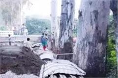 duga bridge construction work now languishing due to not cutting trees