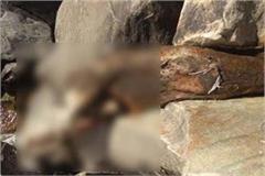 extends sensation from deadbody found in ravine