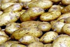 nimatod virus found in himachali potato center imposes ban on exports