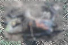 sensation spread in the area by getting a dead body