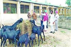 3 officers suspended in animal husbandry