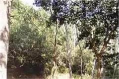 trees standing between hazard ban road