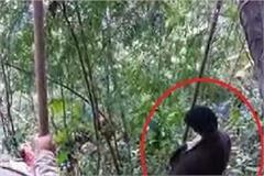 forest guard found hanging from tree in chamba