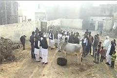 daughters form a government school now reads cow and buffalo