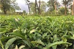 tripura taking measures to facilitate tea export to b desh