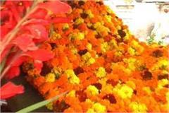 wedding season in three days in bhiwani city