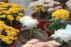 gndu campus fragranced with guldavari flower