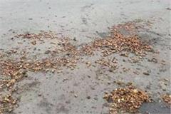 potato scattered from outside of the up capitol to intersections