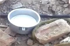 snakes leaving the bottom of shivling during excavation
