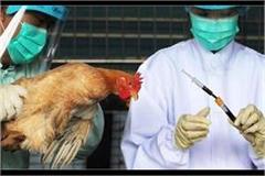bird flu control room set up in animal husbandry directorate