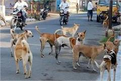panic of stray dogs  people straying out of the house