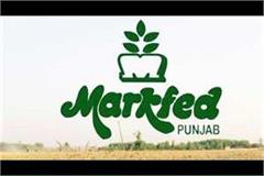 markfed enters e commerce space  launches own app