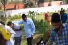bees attack on bjp s celebrating martyrdom day in rest house