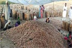 potato farmer happy with produce