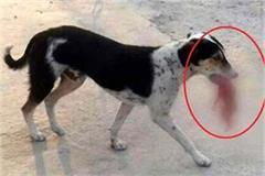 dogs roaming under the mouth of the newborn s body