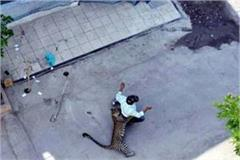 leopard enters home in indore