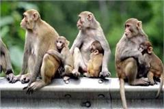 terror case of monkeys and wild animals echo in assembly session