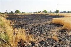 havoc of short circuit on the farmers crop ashes in 35 bigha land