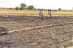 250 acres wheat fen ash sdm girdavari orders given to the patwaris