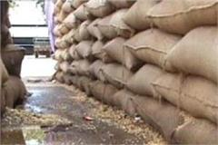 1398 bags of wheat missing from government warehousing