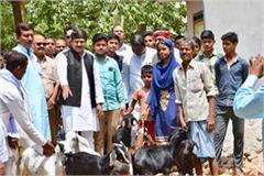 7 goats sold for toilets