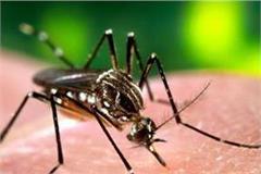 dengue knock in 5 cities before the season