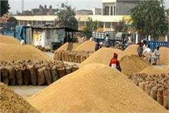 farmer is disturbed wheat procurement not being raised in grain market