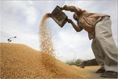 cloud continues to persist in punjab on wheat procurement