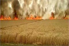 heavy heat ravaged farmers many bigha crops burnt water