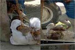 kaliyugi son gave such retardation father to such tortures