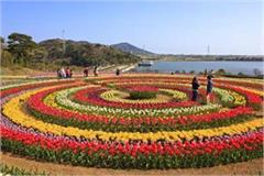 tulip garden to close for public from april 26