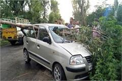 tree fall on moving car in road family safe