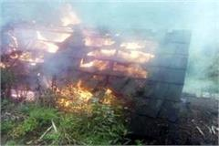fierce fire in house and cowshed 3 cow brunt alive