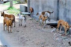 stray dogs put leg of deadbody in mouth were roaming