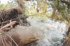 satluj will be poisonous now after beas