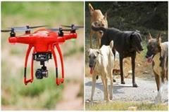 searching of dogs by dron in sitapur
