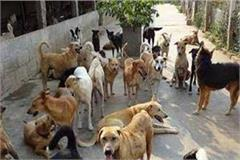horrified animals are scared of uttar pradesh s baisinde