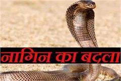 two death in devas by snake bite