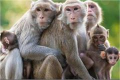 two dozen monkeys stranded in deep well removed after two days
