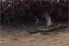 dancing in fatehabad captured in nag nagin video