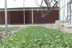 vegetables without seed to grow