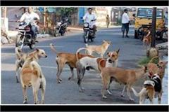 dogs attack in bahraich injured 22 people in 3 days