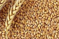 demand for flour in wheat cores